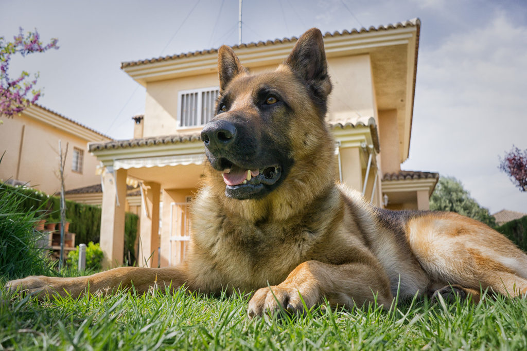 Guard dogs may count as a tax deduction.